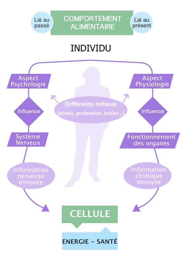 Schema comportement alimentaire v2