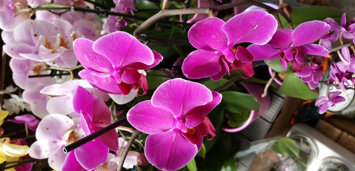 fleurs carousel