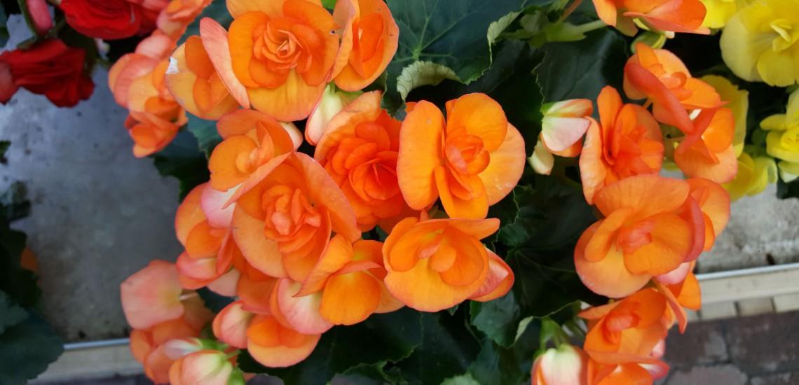 photo fleurs carrousel